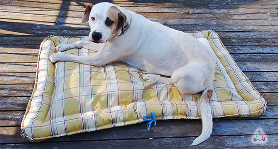 How to make a scrap filled dog bed