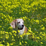 a-guide-to-seasonal-allergies