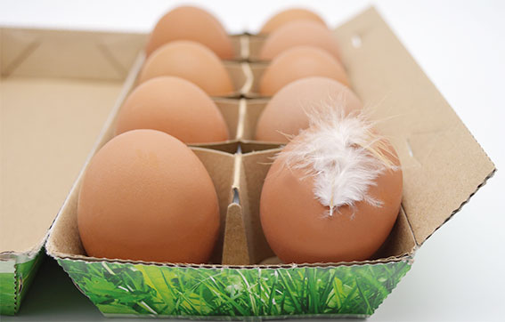 Cage-free-eggs