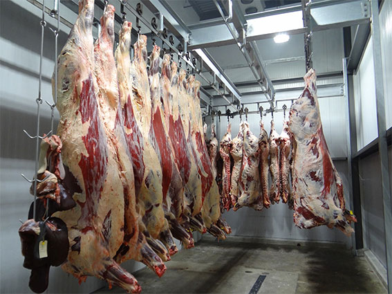 Why-you-should-not-eat-animal-products-slaughter