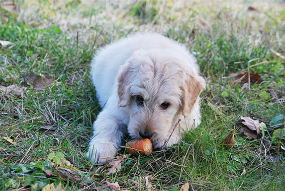 Why-you-should-not-eat-animal-products-vegan-pets